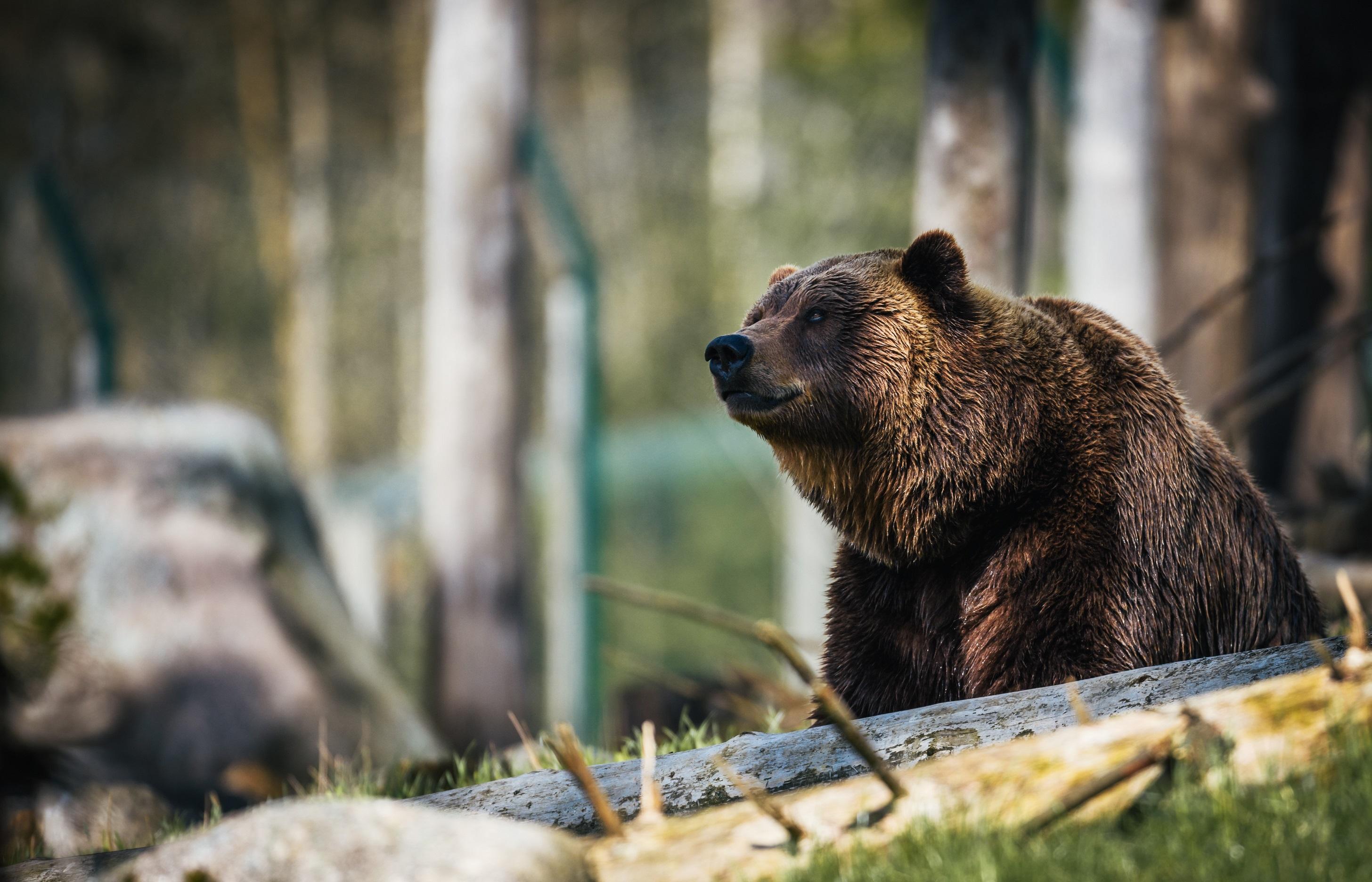 sterktes van de beer
