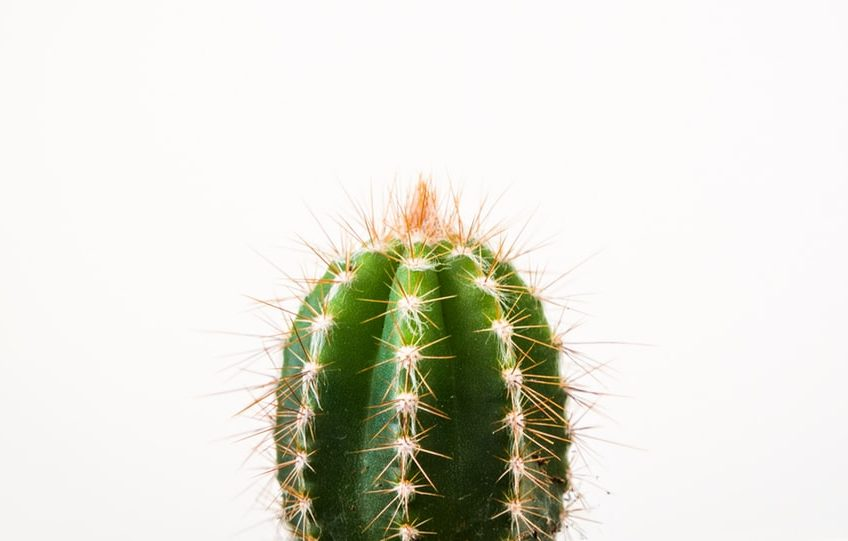 the company cactus